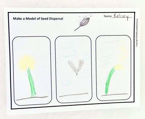 seed dispersal modal
