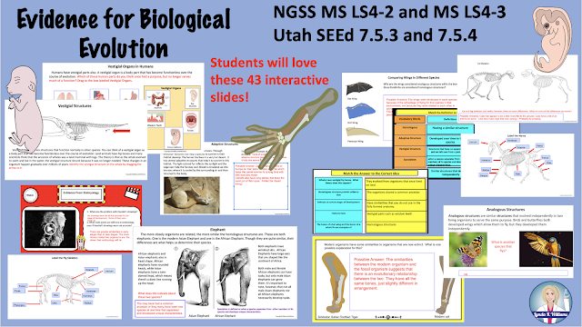 Comparative Embryology and Anatomy