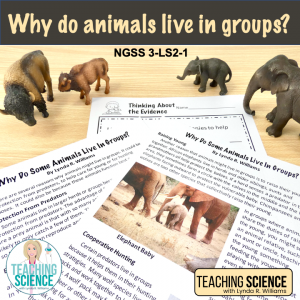Animals live in groups