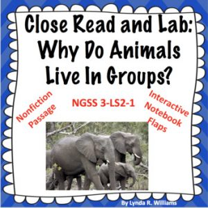 Why do animals live in groups?
