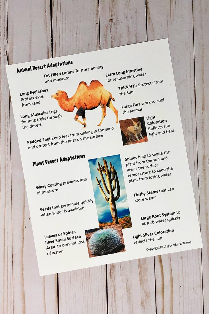 reading passage on adaptations for desert habitat