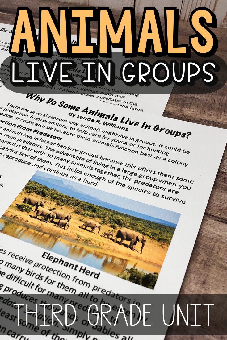 why do animals live in groups third grade uit