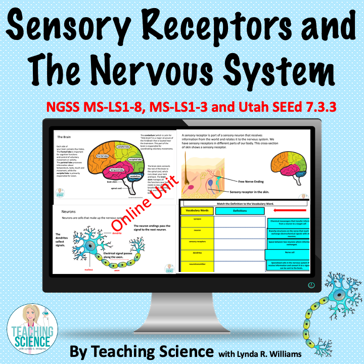 google Slice Unit on Sensory receptors