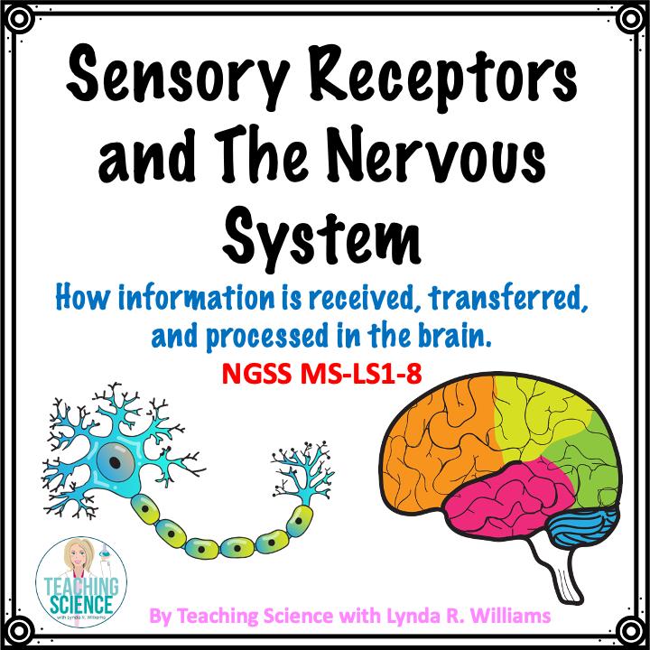 sensory receptors printable unit